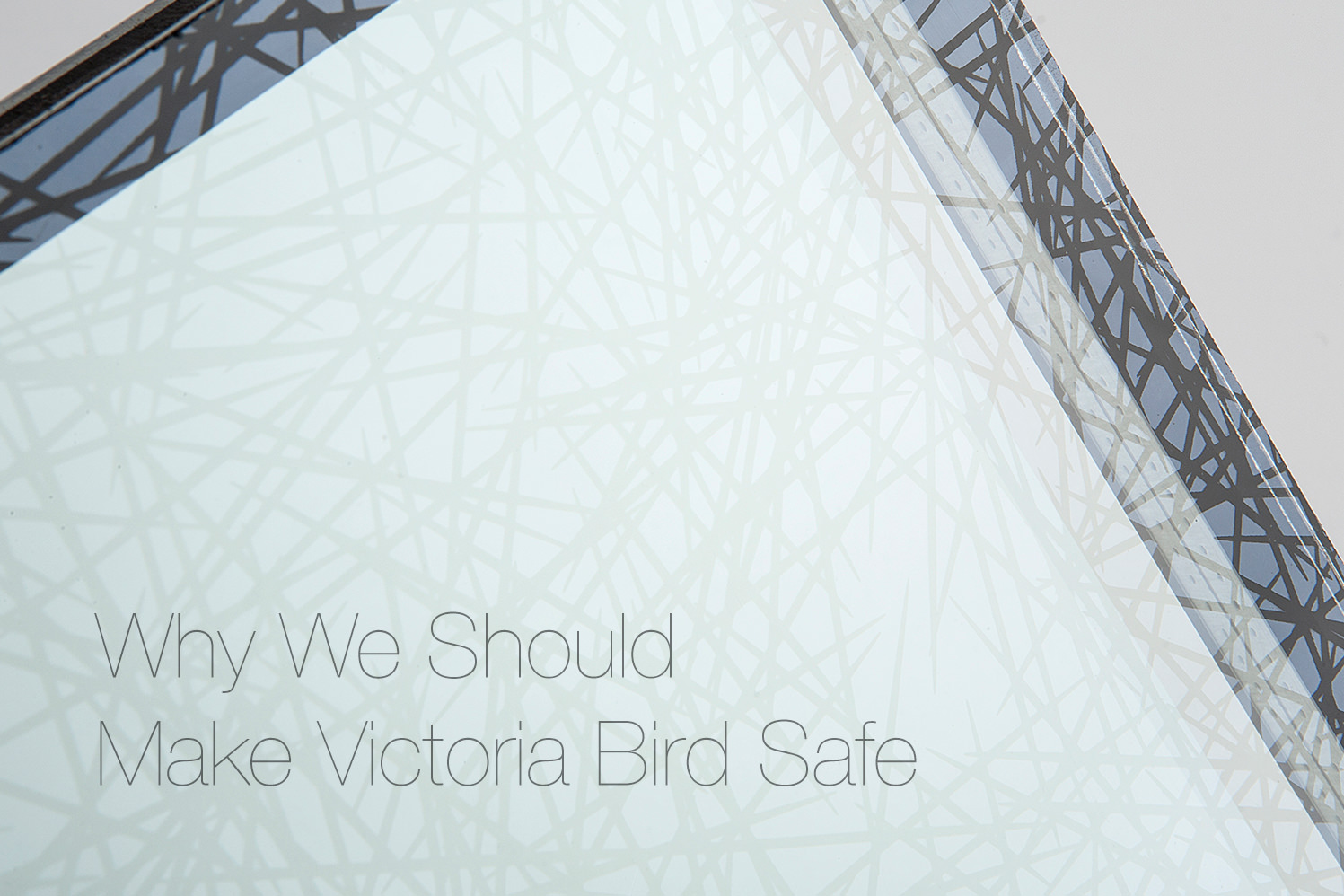 why-we-shoudl-make-victoria-bird-safe
