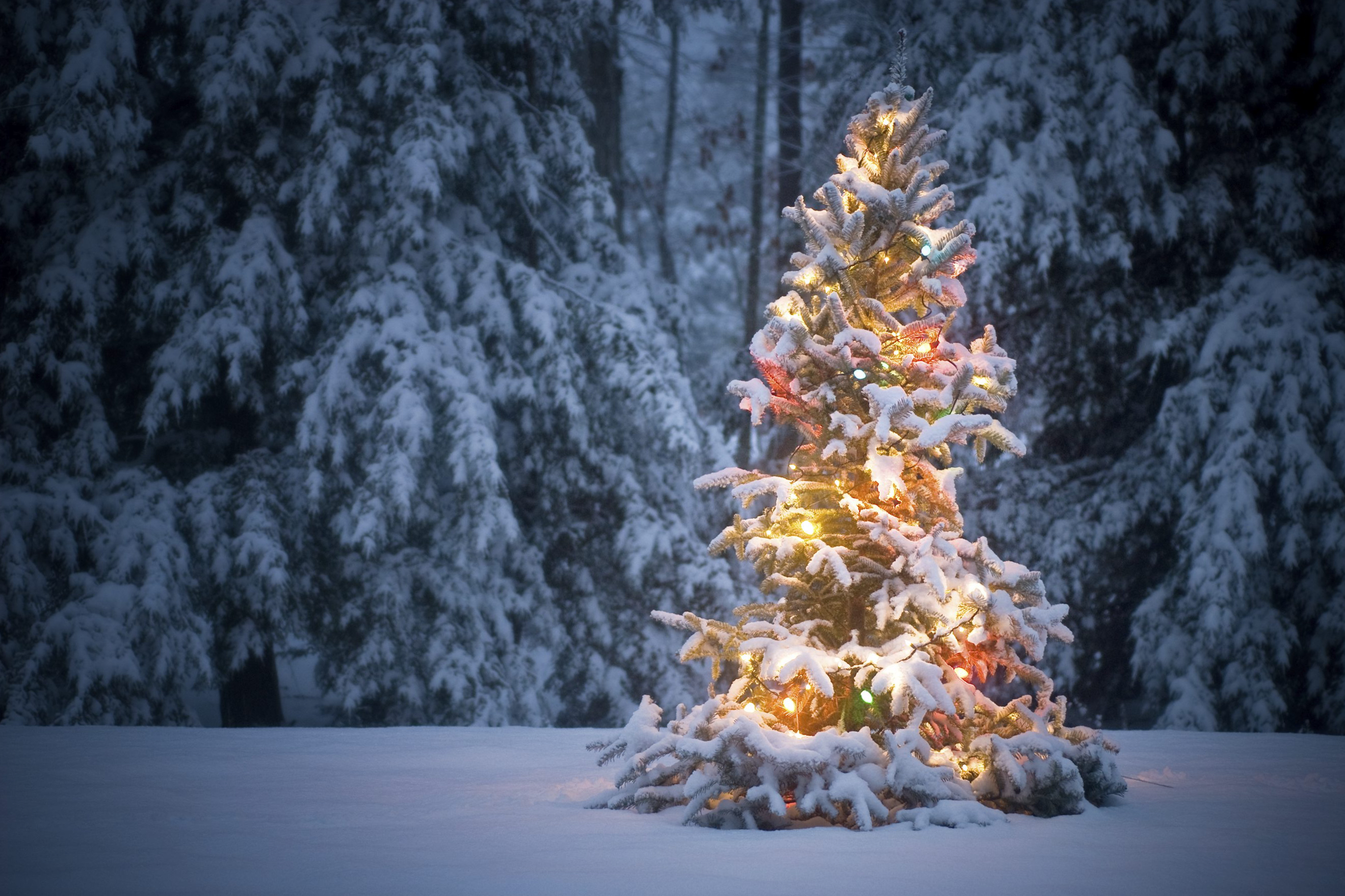 Christmas tree lit under a fresh blanket of snow in the pre-dawn light.