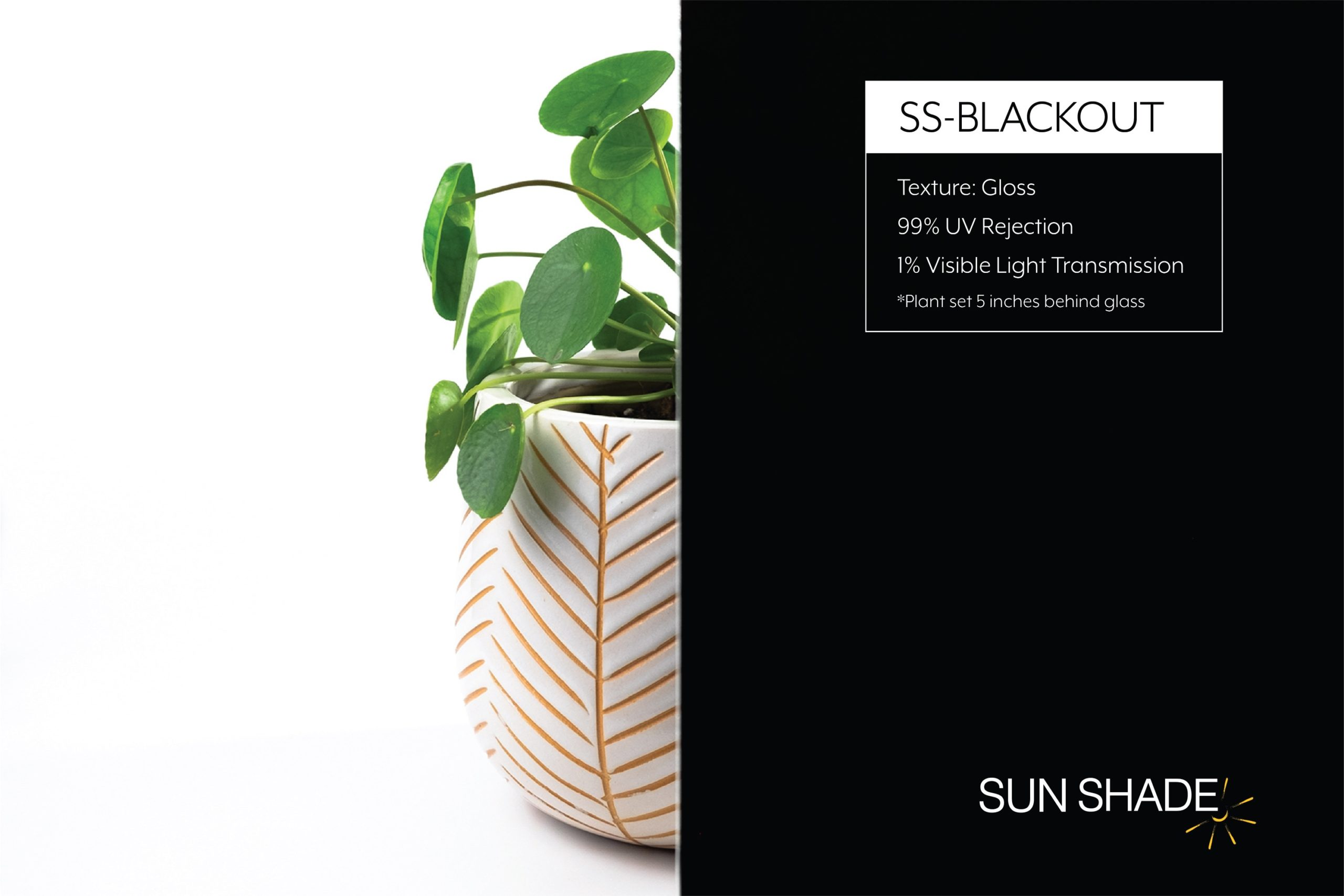 Web version – SS Blackout-2